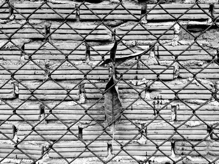 Mesh Wall, Brick and Leaf Mesh Wall, Brick And Leaf Brick Wall Mesh Wall Leaves 🍁 Backgrounds Pattern Full Frame Chainlink Fence Fence No People Safety Outdoors