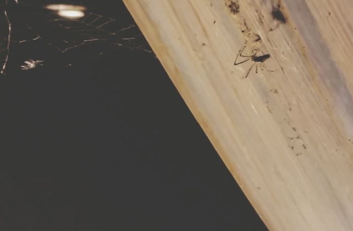 Capture The Moment Chicago Nightime Adventure-chicago Spider Spiderweb Spooky Halloween Halloween_Collection October Fall_collection Halloween EyeEm Halloween2015 Halloweentime