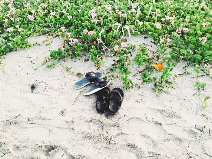Hidden Gems  Flowerbeds Inlet Park Pink Flowers Boca Raton Florida