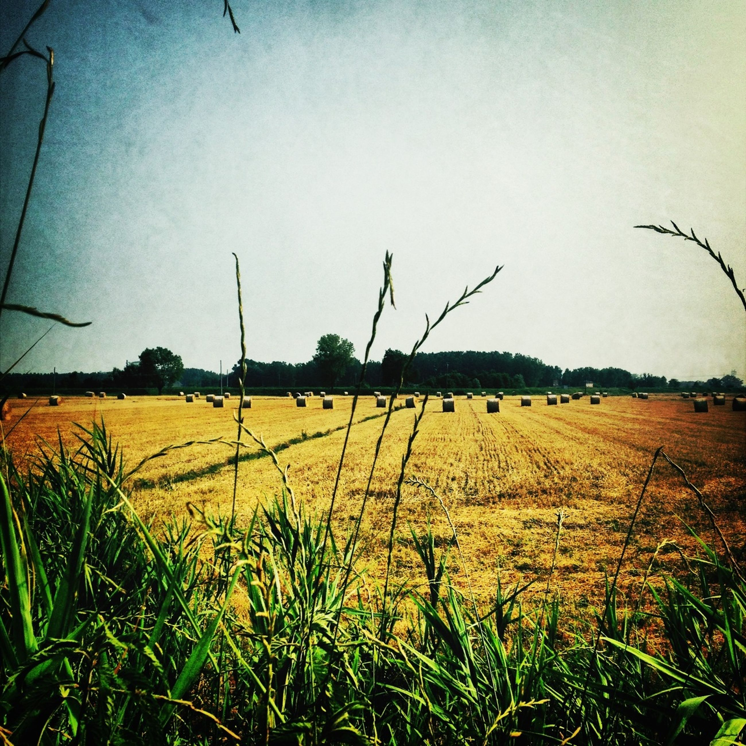 field, agriculture, rural scene, landscape, farm, crop, sky, tranquil scene, tranquility, cultivated land, grass, growth, nature, scenics, beauty in nature, cereal plant, horizon over land, plant, harvesting, bale