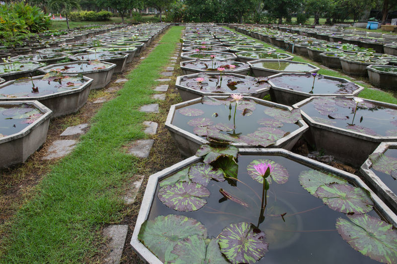 High angle view of flowering plants in pond