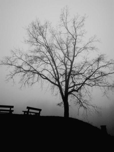Foggy Morning in Drøbak
