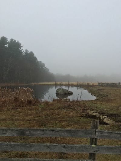 Rural landscape on a misty, foggy morning in Autumn (Massachusetts USA) Nature Misty Morning Foggy Morning Mist EyeEm Best Shots - Autumn / Fall EyeEm Nature Lover EyeEm Best Shots - Nature Rural America Rural Landscape Duck Pond Water Reflections EyeEm Best Shots - Landscape EyeEm Best Shots - Reflections Fog Fog In The Trees Farm Life Pasture Fence Woods Moody Sky Gray Sky Foggy Mistyfoggymilkymoody Dreary Weather  Fog Over Water