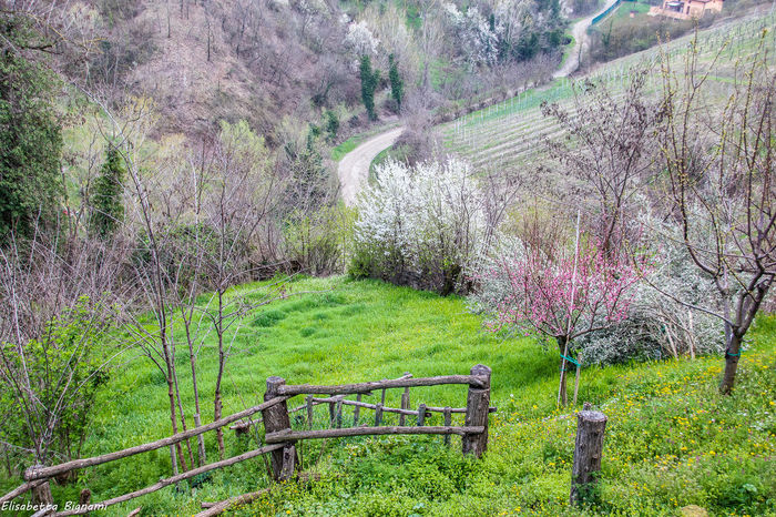 Natura Tree Beauty In Nature Campagne Cherry Blossom Fioriture Flowertree Land Non-urban Scene Outdoors Plant Spring Springtime Tranquil Scene