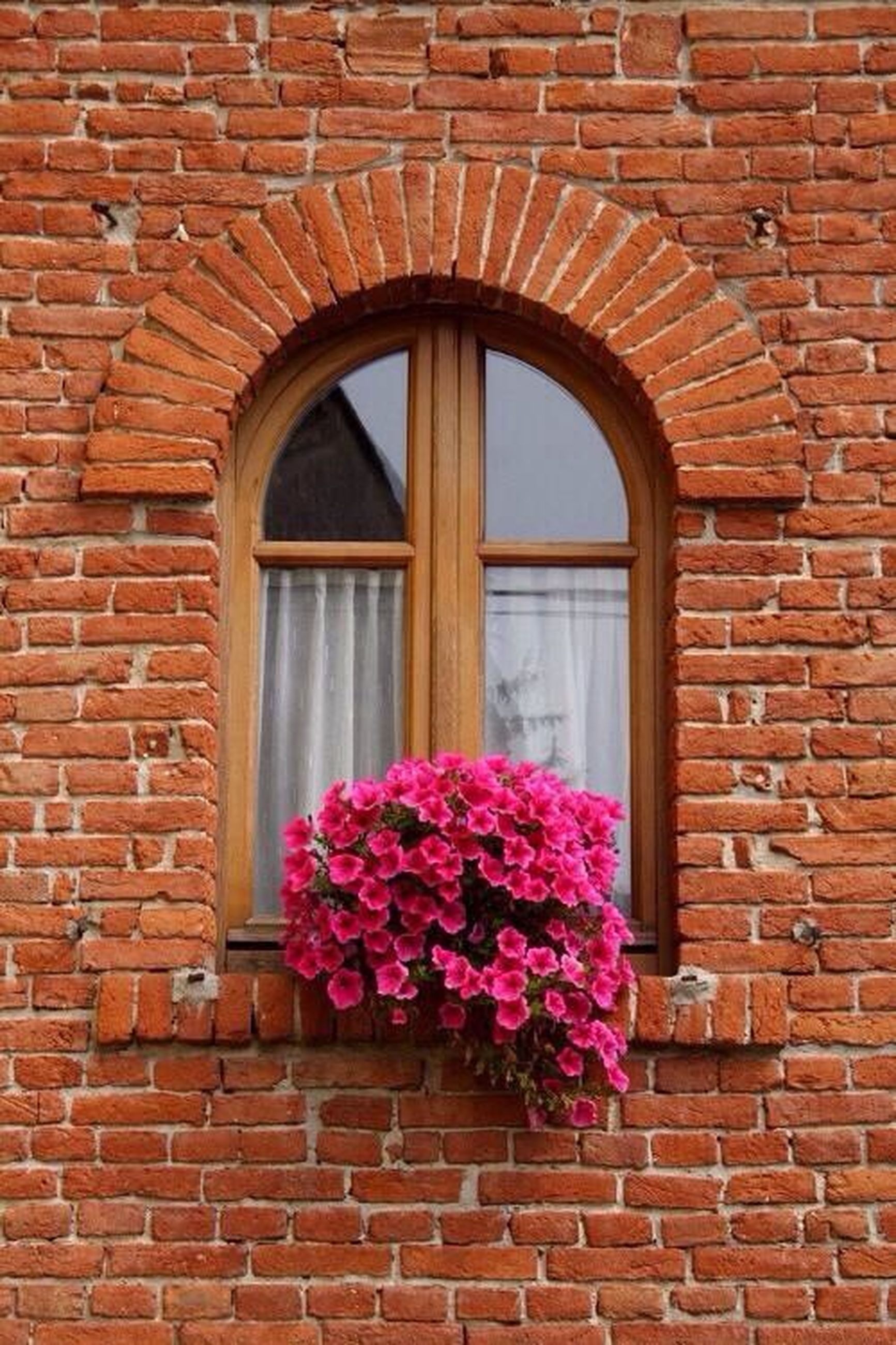 flower, architecture, built structure, building exterior, brick wall, window, pink color, red, stone wall, fragility, wall - building feature, house, freshness, plant, arch, growth, day, petal, outdoors, potted plant