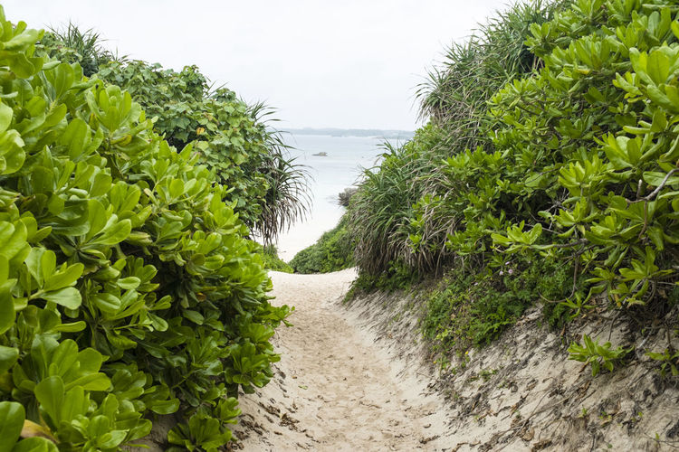 Agriculture Beach Beach Holiday Beauty In Nature Day Green Color Growth Island Japan Leaf Miyakojima Nature No People Okinawa Outdoors Plant Ryuku Sky Sunayama Beach Tree Tropical Paradise Water Water Sport