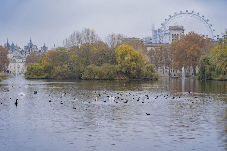 Water Bird Architecture Group Of Animals Waterfront Tree Lake Duck Outdoors Flock Of Birds River Pond Park City London London Eye Autumn Fall Hyde Park St. James Park Ducks Swan Trees Building Exterior Castle