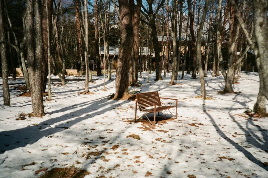 Beauty In Nature Landscape Nature Outdoors Seat Snow Tranquil Scene Tree Winter