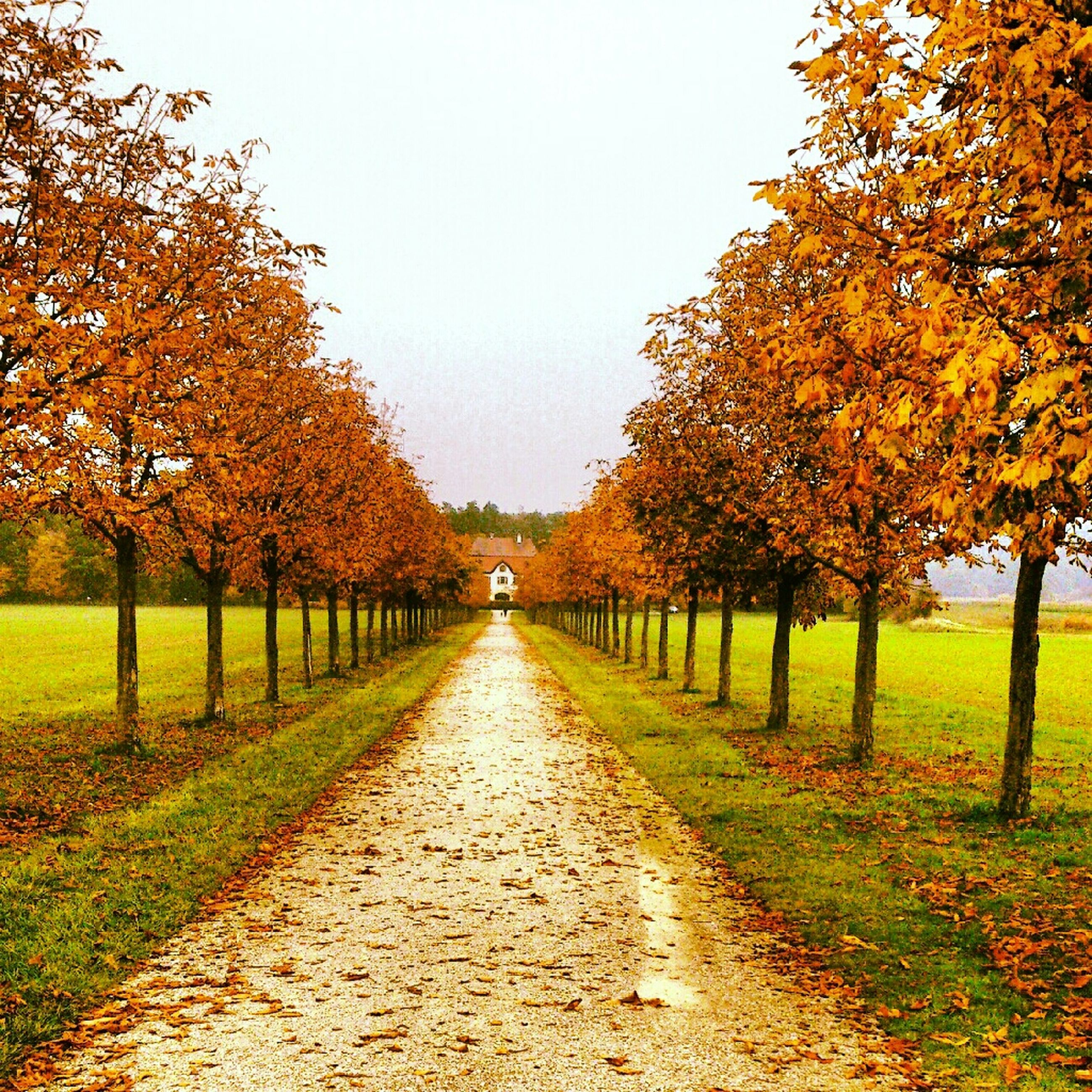 tree, autumn, the way forward, change, diminishing perspective, season, clear sky, treelined, vanishing point, tranquility, footpath, nature, growth, park - man made space, beauty in nature, leaf, tranquil scene, orange color, grass, scenics