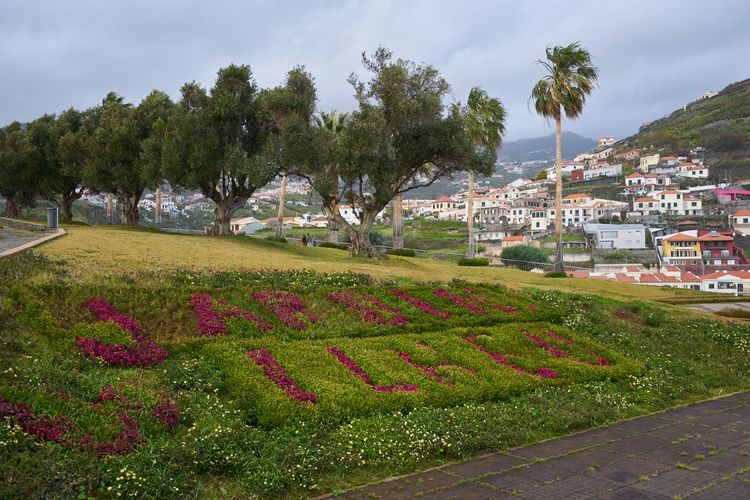 Garden park Jardim Ilhéu with flowers in Câmara de Lobos, Madeira City Cityscape Cloudy Houses Madeira Nature Panorama Panoramic Plants Portugal Portuguese Scenic Travel Trees Architecture Building Europe Flower Garden Island Jardim Landscape Mountain Outdoors Town