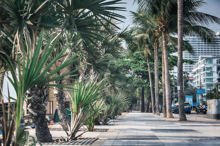 Footpath amidst palm trees in city