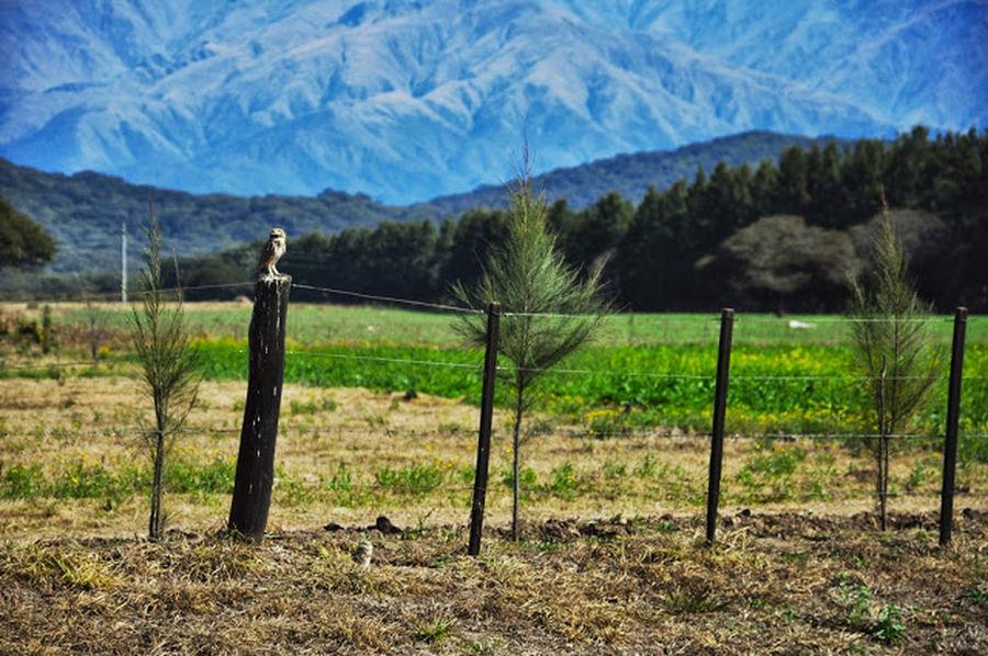 Nikon D90 Salta, Argentina Holidays