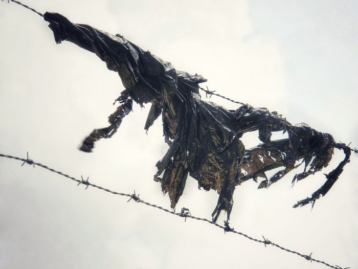 Low angle view of shredded plastic on barbed wire against sky