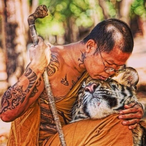 Cat Tiger Monks Love