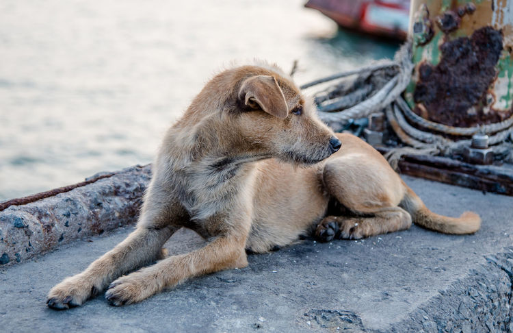 Stray dog at jetty Animal Animal Themes Cute Day Dog Fur Jetty Lay Down Life Mammal Nature No People Outdoors Pet Portrait Portrait Of Dog Relaxation Relaxing Rest Sea Stray Dog
