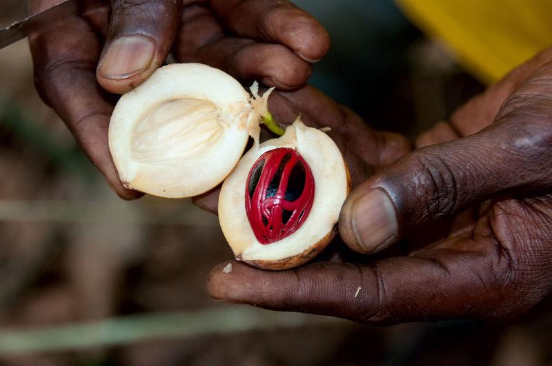 Close-up of hand holding fruit - nutmeg