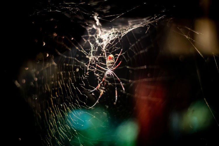 Golden silk orb-weaver spider. Creepy Crawly Golden Silk Orb-weaver Spider Animal Animal Wildlife Arachnid Arachnophobia Close-up Complexity Fragility Insect Invertebrate Nature No People One Animal Orb Weaver Orb Weaver Spider Spider Spider Web Survival Vulnerability  Web