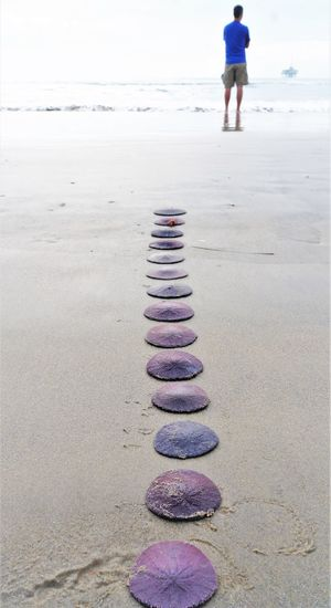Follow Me to the Sea High Key Land Beach One Person Nature Rear View Sand Day Sea Full Length Water In A Row Real People Standing Women Stepping Stone Outdoors Leisure Activity Balance Sand Dollar Beach Photography Beach Life Relax Relaxation Relaxing Moments Purple