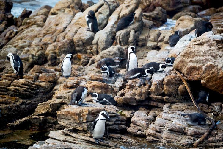 View of birds on rocks