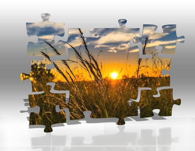 Plant Nature Sunset Decoration No People Indoors  Sky Table Flower Focus On Foreground Beauty In Nature Growth Flowering Plant Sunlight Celebration Still Life Illuminated Close-up Potted Plant Puzzle