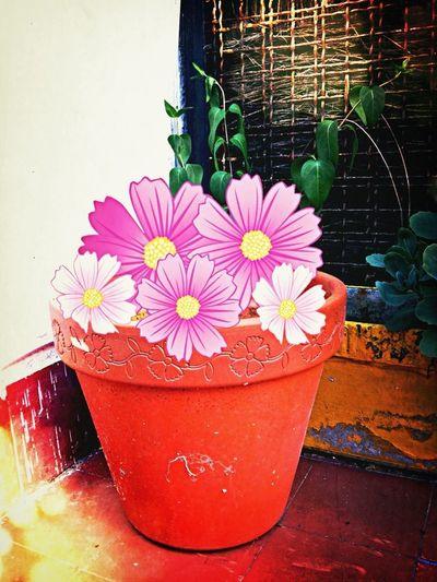 Meeting Spring Flowers