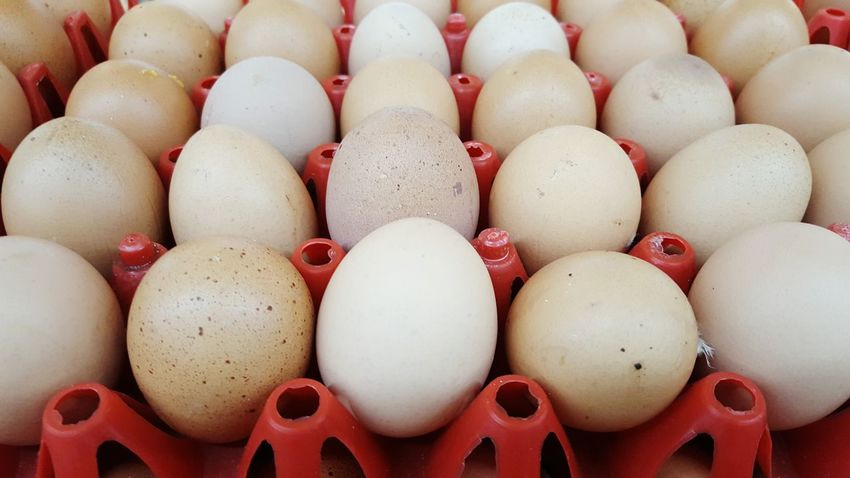 Everything In Its Place Egg Eggs Chicken Eggs Pattern Row Protein Chicken Egg