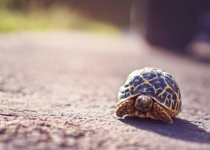 Tortoise on road