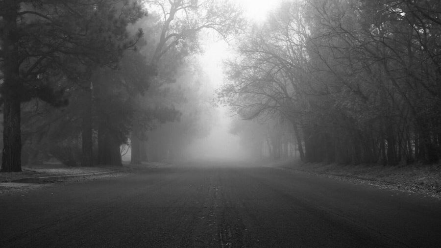 Black And White Friday Tree Nature Fog The Way Forward Tranquility Beauty In Nature Tranquil Scene Scenics Landscape Outdoors Day No People Mist Road Forest Cold Temperature Winter Bare Tree Branch