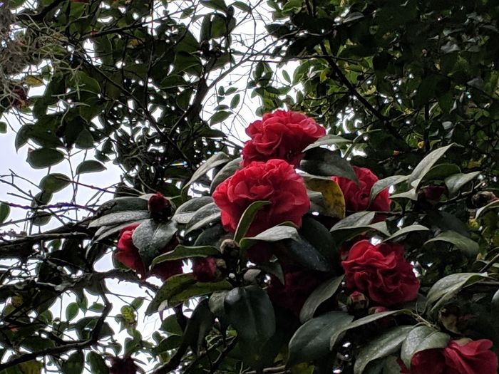 Low angle view of red flowering plants on tree
