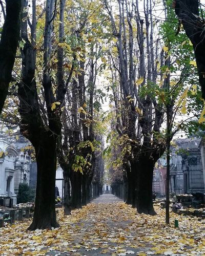 Autumn Autumnleaves Autumncolors Colors Leaves Trees Yellow Brown Autunno  Foglie Colori Natural Nature_perfection Nature Naturalovers Sight Sightseeing Travel Travelpic Milano