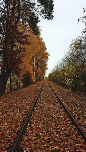 Tree_collection  Autumn🍁🍁🍁 Autumn Colors Autumn 2015 Colorsplash Nature_collection Nature Photography Autumn Collection The Beauty Of Fall Leading Lines Learn & Shoot: Leading Lines Train Tracks Twilight Nature On Your Doorstep No People Bruchmühlbach-Miesau Places You Must To See Colors Of Autumn My Best Photo 2015 Learn & Shoot: After Dark Pastel Power Evrything In Its Place Urban Landscape White Wall