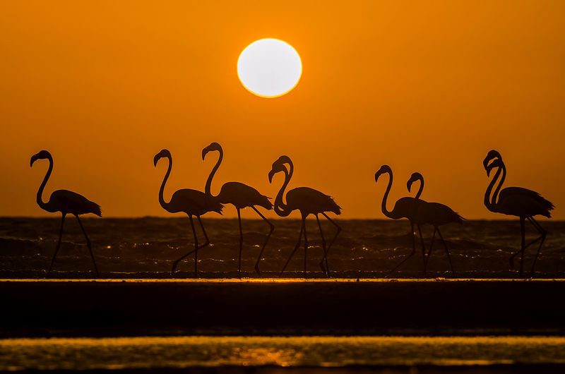 Silhouette flamingo in sea against sky during sunset