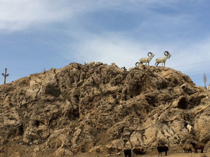 Goat Statue Activity Adventure Climbing Cloud - Sky Day Extreme Sports Herd Land Leisure Activity Low Angle View Mountain Nature Outdoors People Real People Rock Rock - Object Rock Formation Sheep Sky Solid Tranquility