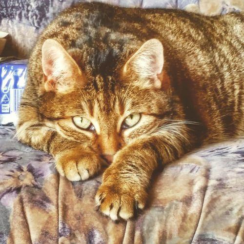 Respect For The Good Taste Let's Do It Chic! Meinekatze Katzen 💜 Katzenfoto Meine Katze Katze