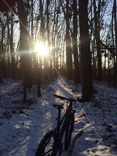 Tree Forest Winter Nature Sunbeam Sunlight Sun Sunset Pinaceae No People Tranquility Landscape Snow Cold Temperature Pine Tree Scenics Outdoors Beauty In Nature Tree Area Day Winterride