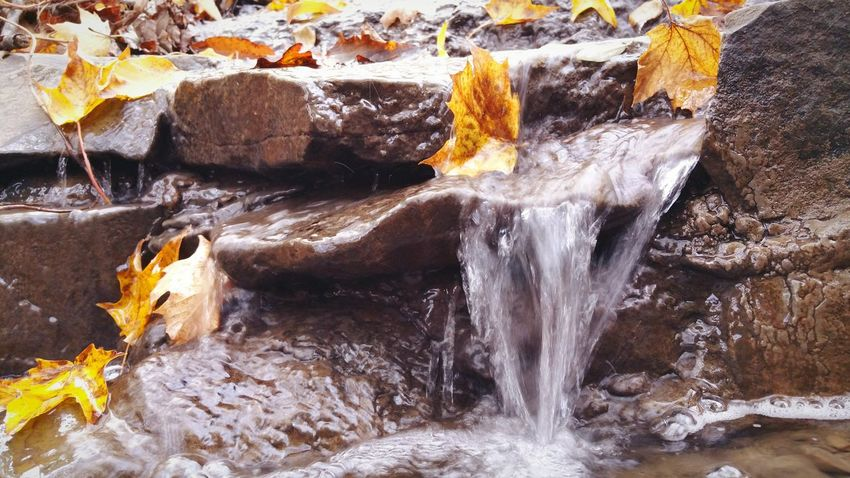 EyeEm Selects Rock - Object No People Nature Outdoors Day Water Beauty In Nature Close-up Beauty In Nature Autumn Tranquility Tranquil Scene Leaves Leaves 🍁 Leaf Creek View Creekscapes Creek Collection Stream_collection