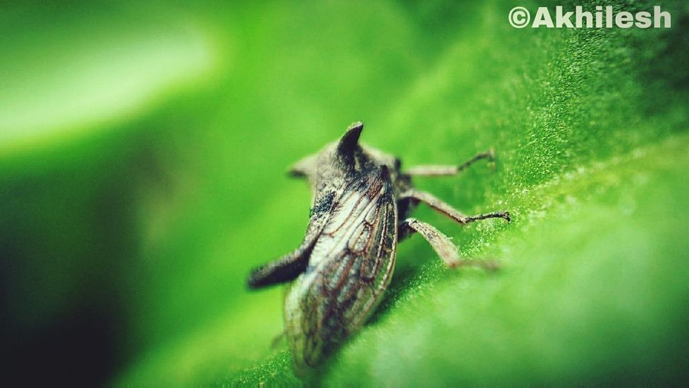 Insect Macro Photography Macro Nature Macro Beauty Grasshopper Leaf Nature Outdoors Day No People Moto G4plus Motophotography Close-up First Eyeem Photo