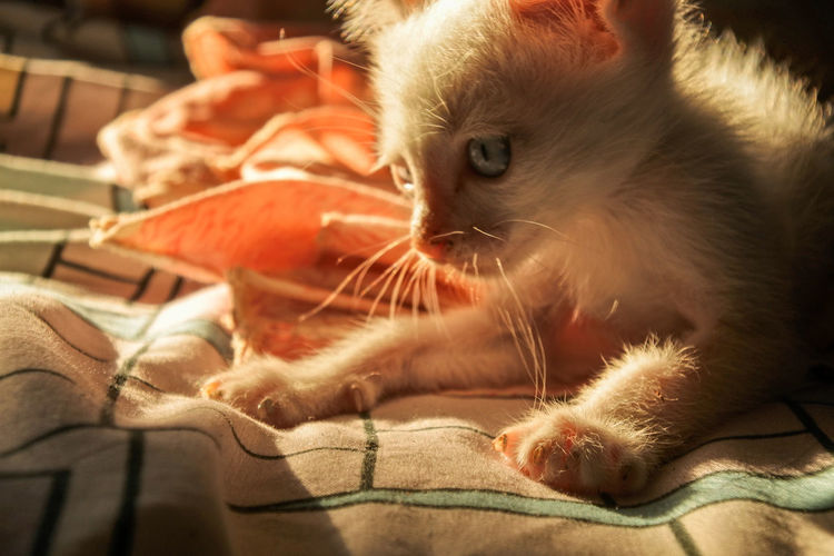 Close-up of kitten relaxing at home