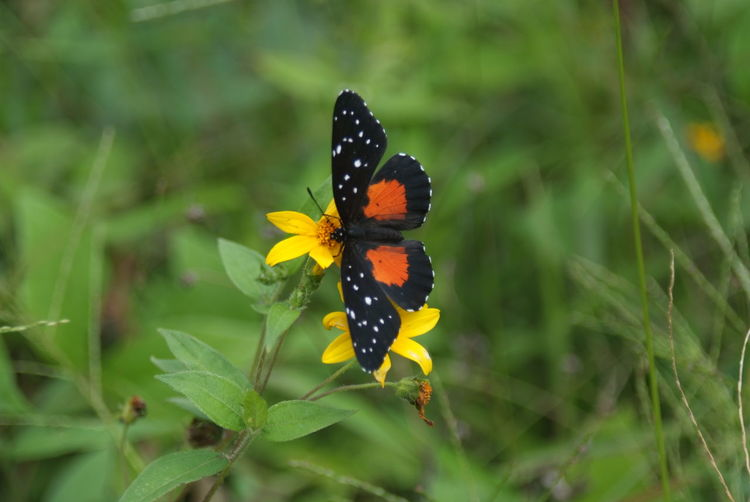 Black And Orange Butterfly Butterfly Butterfly - Insect Insect