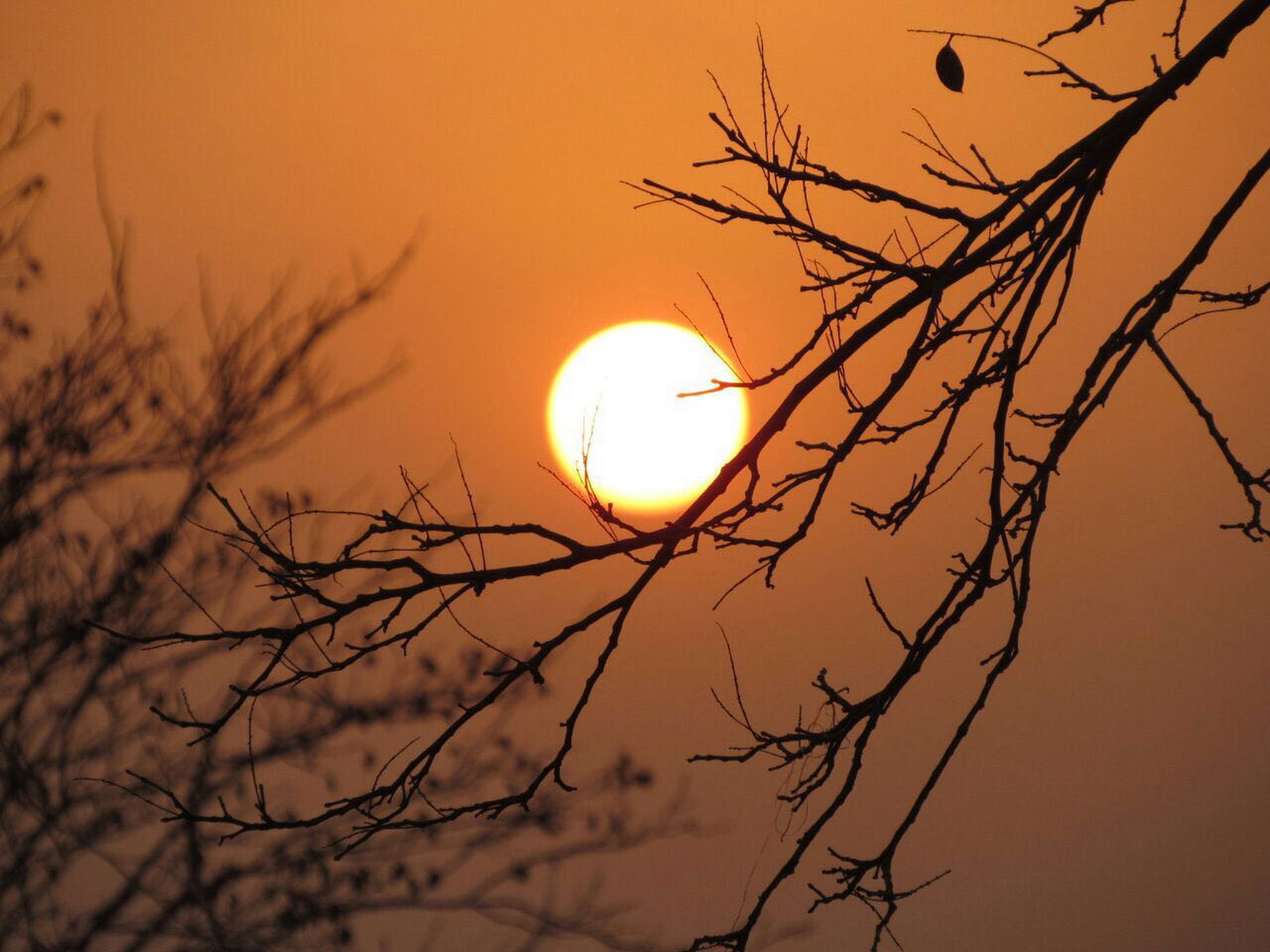 branch, silhouette, scenics, beauty in nature, sun, tranquil scene, tranquility, bare tree, tree, sunset, glowing, idyllic, majestic, nature, low angle view, moon, high section, tree trunk, sky, dramatic sky, outdoors, orange color, atmosphere, circle, planetary moon, dreamlike, atmospheric mood, vibrant color, romantic sky, no people, remote, silence
