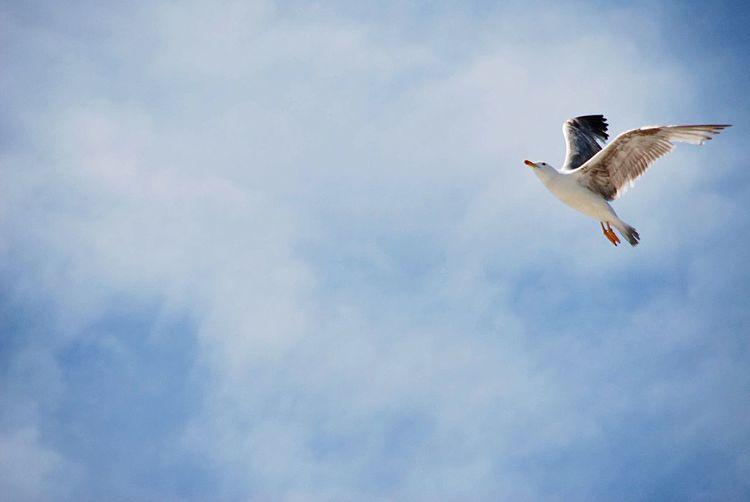 Seagull EyeEm