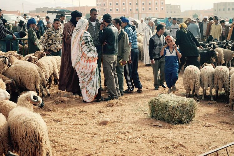 Market Day in Morocco Travel Photography Adult Africa Crowd Day Domestic Animals Indoors  Large Group Of People Mammal Marketplace Men People Real People Rural Morocco Sheep Standing Women Adventures In The City