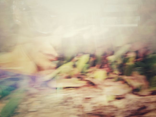 Traveling Train Ferrovie del Sud-est Selfportrait Abstract Me Abstract Nature Glitch
