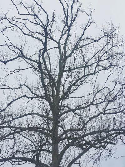 Ghost Tree First Eyeem Photo