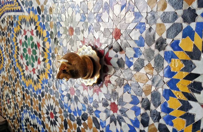 Morocco Floral Pattern Canine Flooring Multi Colored Directly Above Indoors  Pattern No People Relaxation High Angle View Vertebrate Feline Animal One Animal Animal Themes Pets Artisan Art And Craft Art Interior Design Mozaik Mosaique Zellij