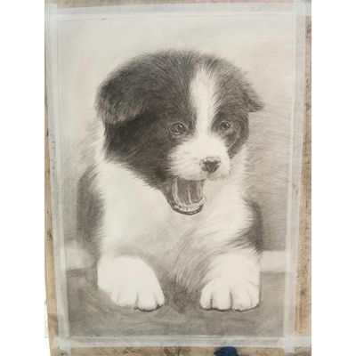 Art Painting Draw Drawing - Art Product Drawingtime Competition Drawingcompetition Dog Pet