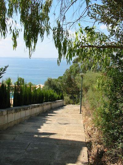 Stairs Treppen Sea Water Sky Tree Blue Sky Oceanview Himmel Ocean Mallorca First Eyeem Photo Wasser Meer Mediterranean Sea Blauer Himmel Urlaub Holiday Sea And Sky Ausblicke Aussicht