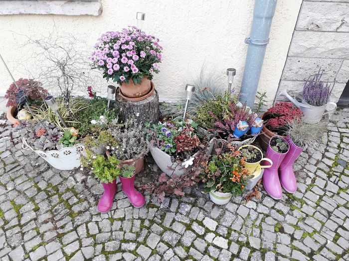 Potted plants on footpath