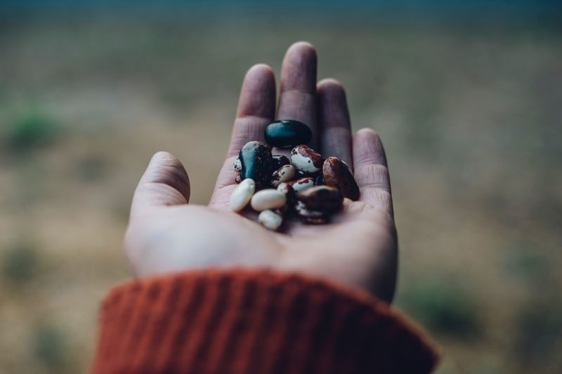 A handful of beans Harvest Bounty Farm Fresh Rustic Style Heirloom Fall Seed Saving Gardening Beans Grow Your Own Food Farm Healthy Eating Seeds Human Hand Hand Human Body Part One Person Holding Focus On Foreground Real People Nature Close-up Food And Drink Lifestyles Food