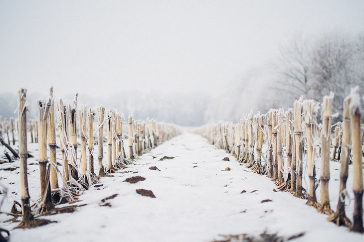 Fence On Snowy Field Against Sky During Foggy Weather